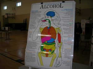 Impact of Alcohol on the Brain